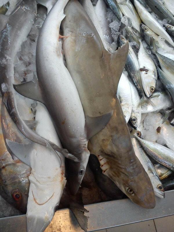 Ikan Yu