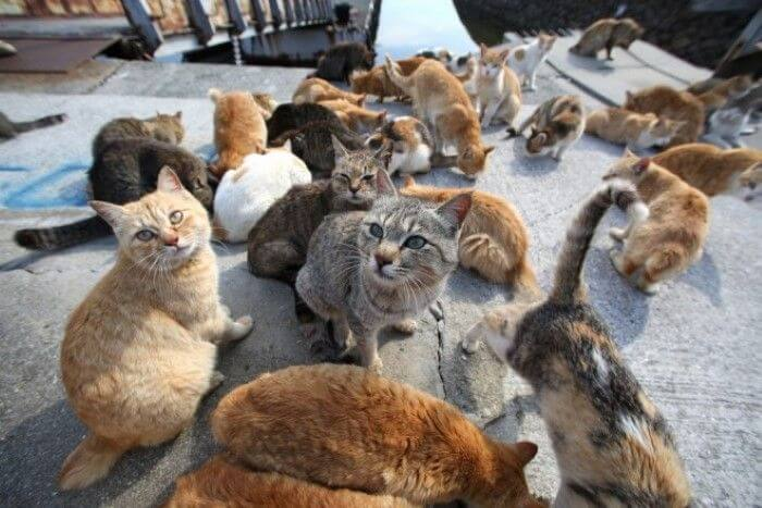 Japans Famous Okishima Cat Island Is At Risk Of Being World Of Buzz 2
