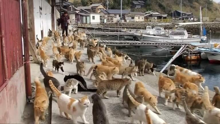 Japans Famous Okishima Cat Island Is At Risk Of Being World Of Buzz 5 768X432