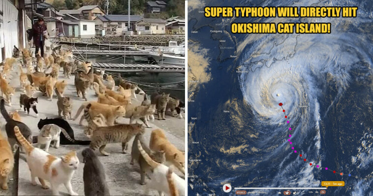 Japans Famous Okishima Cat Island Is At Risk Of Being World Of Buzz 6 1