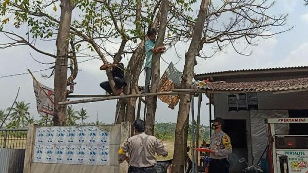 Warga Cilegon Dihukum Baca Yasin Dan Naik Ke Pohon Karena Langgar Protokol Kesehatan Foto M Iqbaldetikcom 2 169