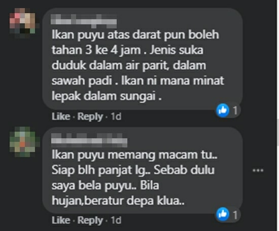 Comment Ikan Puyu