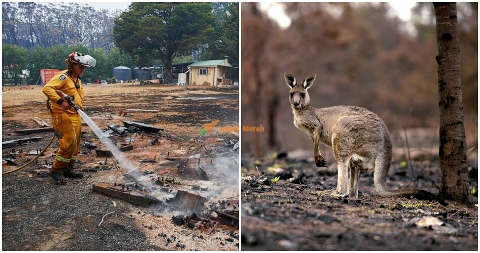 Kebakaran Hutan Australia Ft Image 1