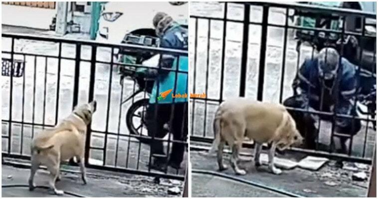 Video Abang Grab Hidang Makanan Buat Anjing Viral